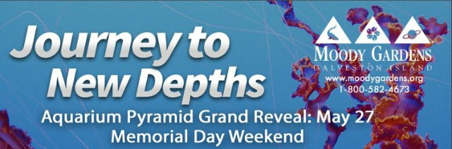 Aquarium Pyramid Grand Reveal